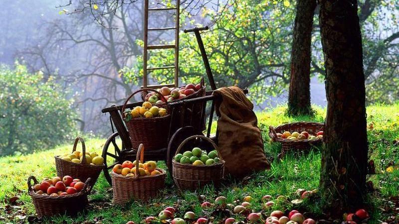 Плодово-ягодная республика