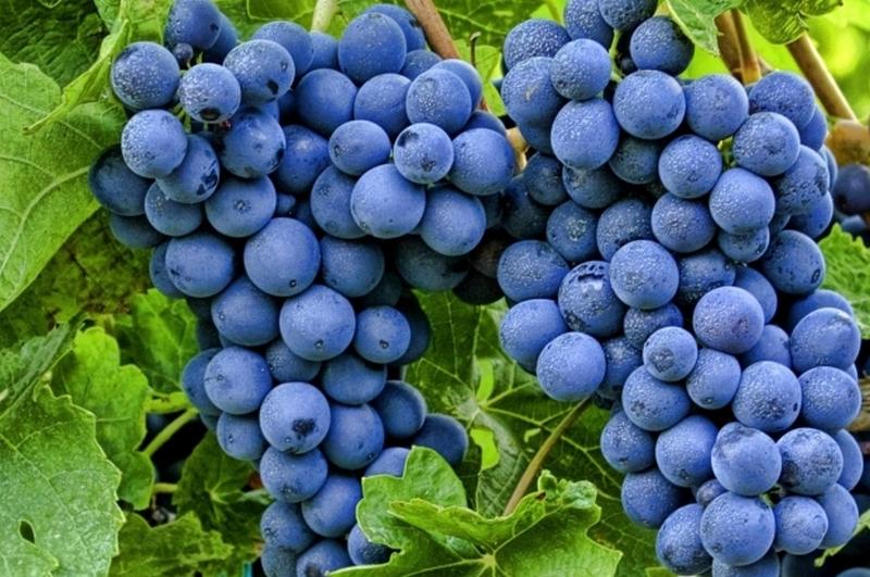 Крымский виноград